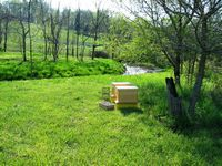 New Beehives: Pearmund Cellars Vineyard and Winery Broad Run, VA
